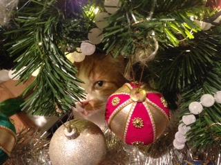 Deze afbeelding heeft een leeg alt-atribuut; de bestandsnaam is poesje-kerst.jpg